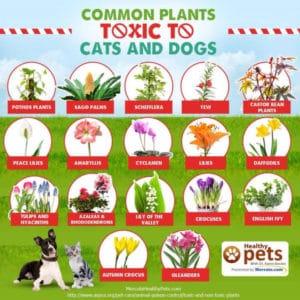 piante nocive