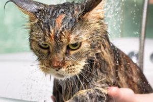 shampoo gatti