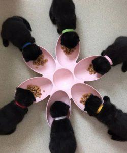 ciotola cuccioli