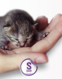PartoS Cat