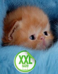 PartoXXL Cat